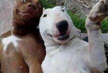 Got to love dogs  / They just make you smile.....most of the time.