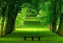 All Things Green / ... tranquillity, life, envy, nature, jealousy...