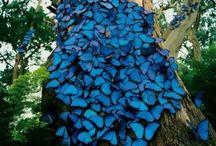 Butterfly, flutter by / Beautiful & so delicate