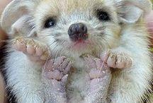 Hedgehogs / My favourite animals
