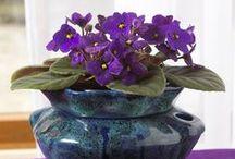 Indoor Plants / Tips for growing healthy indoor plants