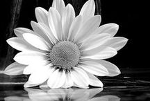 Black and White / Images that celebrate black and white
