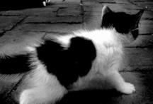 Kitties & Hearts