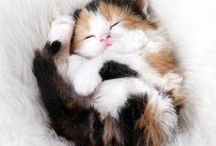 Uncontrollable Cuteness / For those days when you just need a big dose of adorable kitten.