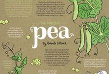 edible Art, Illustrations & Infographics / Beautiful interpretations of the food we love. #loyaltolocal