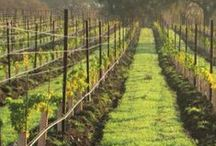 Local Wine / Get to know local wines and the artisans who make it. #loyaltolocal #wine