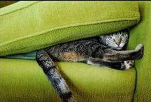 Cats Chillin