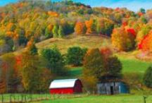 edible Fall / Seasonal recipes for Autumn fruits and vegetables. #loyaltolocal