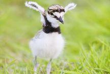 birds / by Joan Greger