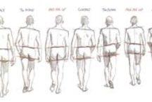 Anatomy Study / animation