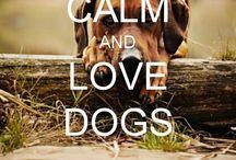 I Love My Dog Spartacus... / by Rachael Powell Dahlgren