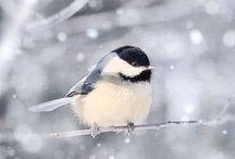 Animaux - Oiseaux