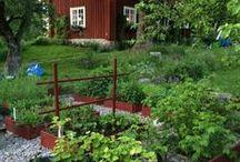 Trädgård / Blommor