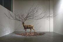 exhibitions & installations ...