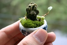 MICRO GARDENING / Terrariums, vivariums, ripariums, bonsai, kusamono, wabikusa & aquascaping. Basically all things green, nano & micro. / by Scott larockwell