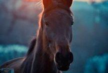 horses ^_^