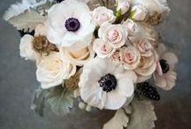Blumen / Blumen, Natur, Flowers, flower, roses, rose, pastels, spring, summer, pretty, beautiful,