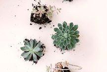 Zimmerpflanzen / Zimmerpflanzen und Sukkulenten für zuhause.