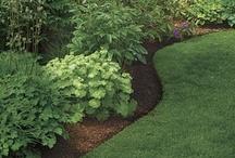 Landscaping & Gardening / by Leslie Culver