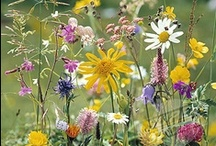 English Wildflowers / by Deborah Bartlett