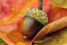 Autumn / Autumn color and fall splendor