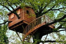 Tree Houses / Tree houses from all over the world. Treehouse pictures of all shapes and sizes. / by Trees Group