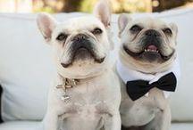 Pets in Weddings / by WedShare.com