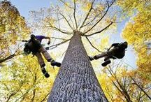 Tree Climbing / by Trees Group