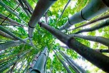 Bamboo / by Trees Group