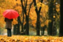 autumn / by Deirdre M