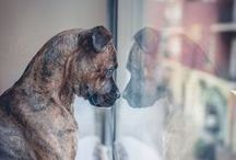 animal inspiration / animal photography and photography with animals / by Deirdre M