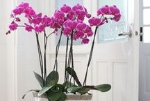 Orchids and Other Houseplants / by Deborah Bartlett (Rosenoff)