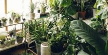 Nature〽 / Landscapes, Places, Plants, Planters, Green.