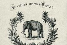 Elefantes-Eléphants-大象