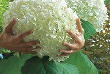 garden / by Elizabeth Kamal