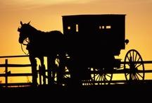 The Amish Way / by Judy Vardon