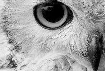Owls | Hoot / by Tarnya Harper