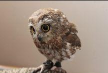 Owls / by Susan Archila