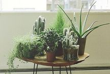 House Plants / Plants that grow well indoors and information we need to know! / by Cynthia Wiebe Wiebelhaus