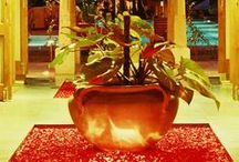 Ayurveda Spa Retreats / Embrace an all-encompassing holistic approach with mental, physical and spiritual healing on a luxury Ayurveda spa holiday. Experience traditional practices that will help cure emotional imbalances and rejuvenate your body, mind and soul. http://www.healthandfitnesstravel.com/ayurveda-spa-holidays