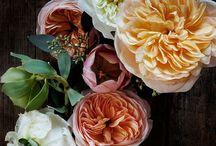 F L O R A L . I N S P I R A T I O N / ....beautiful blooms.... / by C R E A T E.  t h e.  C U T.