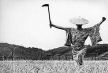 風土の意匠 the design of the Japan climate / 列島の風土性を有する庶物