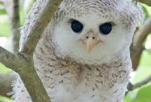 ~Adorable Animals & Birds~ / Will make you smile, because they are so cute and adorable.... / by ~Heather Yachiw~