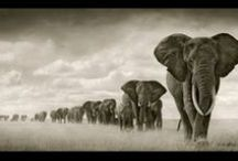 Nick Brandt: Artist or Activist? / In Africa, photographer Brandt assembles an anti-poaching army. / by Sierra Magazine