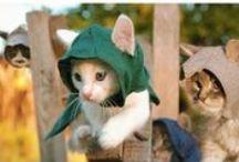 Cat Videos / Find a lot of cat videos here :D