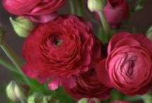 Flowers >O<
