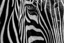 Black & White...!