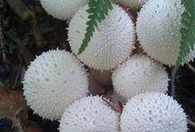cactuse$