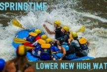 Spring Fever / by ACE Adventure Resort