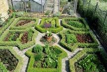 Veteményes/Vegetable garden